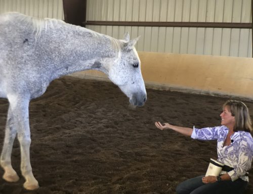 Choice: How it affects your horse's learning, ridden work and overall wellbeing