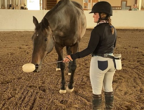 Jaxx enjoys being demonstration horse