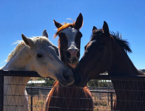 The Importance of Reading and Understanding Your Horse's Body Language