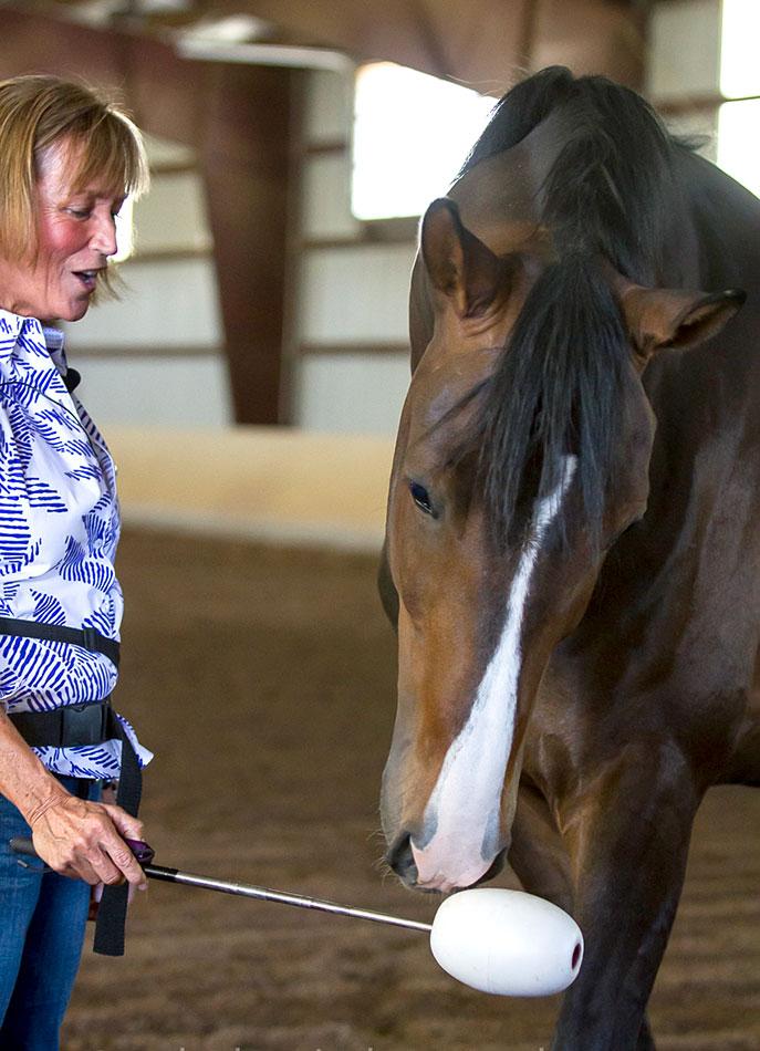 Shawna Karrasch, Positive Reinforcement Trainer and Behaviorist at Terra Nova Equestrian Training Center in Santa Fe, NM using a target in training a horse.