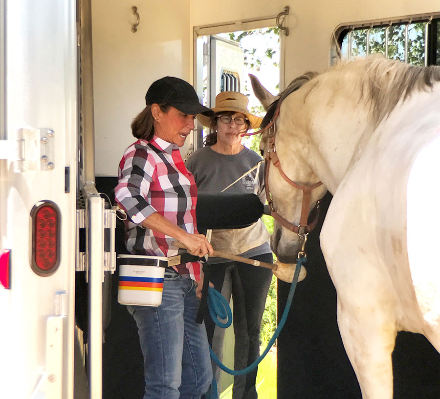 Horse and clinic participant being trained on trailer loading by Shawna Karrasch, Positive Reinforcement Trainer and Behaviorist at Terra Nova Equestrian Training Center in Santa Fe, NM