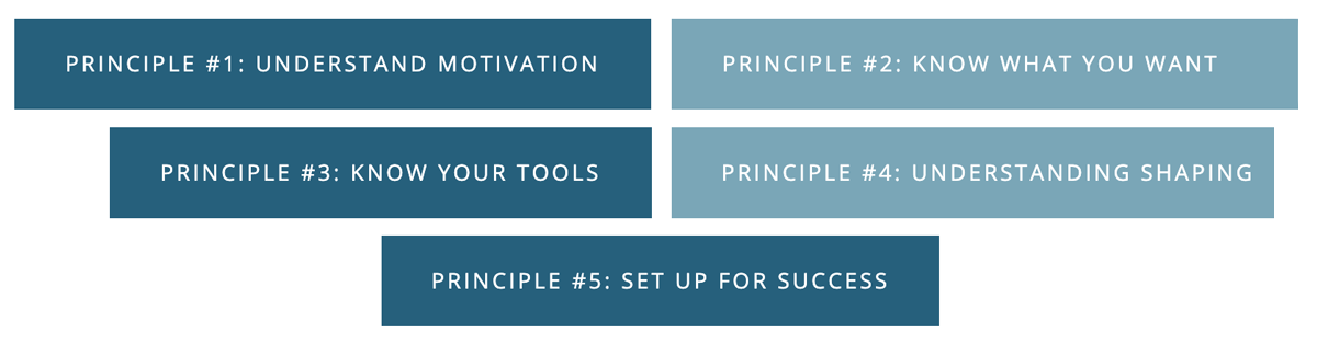 five principles of priority to positive