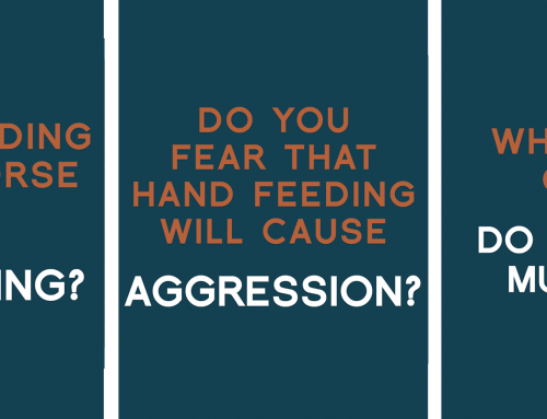 Breaking Down the Key Aspects of Hand Feeding Safely with Positive Reinforcement: Part 1