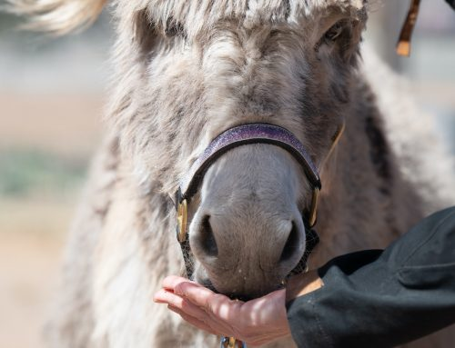 Breaking Down the Key Aspects of Hand Feeding Safely with Positive Reinforcement: Part 2