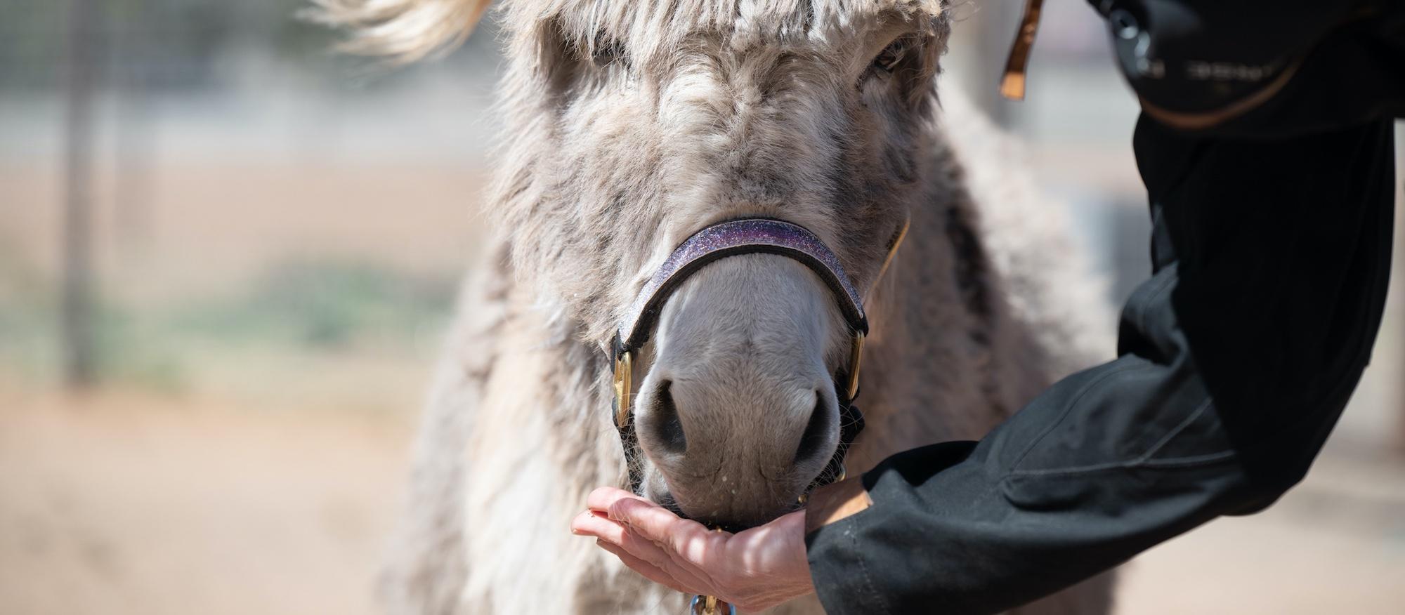 mini donkey positive reinforcement