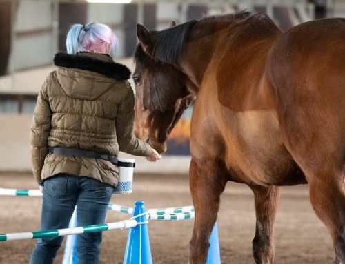 Breaking Down the Key Aspects of Hand Feeding Safely with Positive Reinforcement: Part 3
