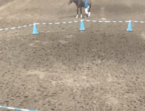 Via Nova Priority to Positive® – Teaching a Young Horse about the Reverse Round Pen