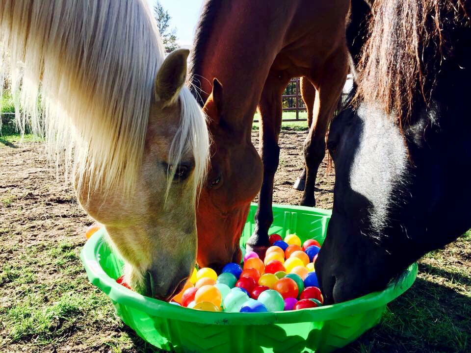 Three horses being entertained with balls in a tub to keep them from getting bored.